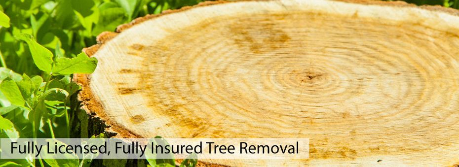 Fully Licensed, Fully Insured Tree Removal | Tree stump